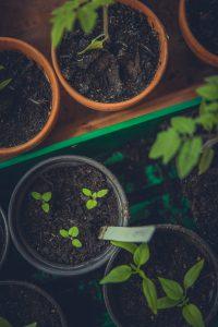 Teeltmedewerker Bloemen & Planten 1